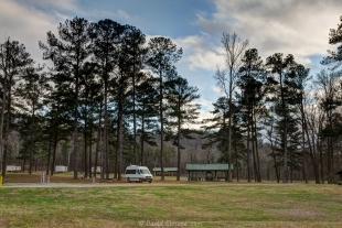 Smith Lake County Park, Cullman, Alabama - Vanessa and Pine trees