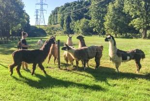 Amanda Elmore with our llama, Franklin