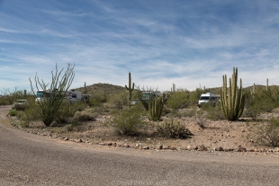 Vanessa in Twin Peaks Campground, Organ Pipe Cactus National Monument