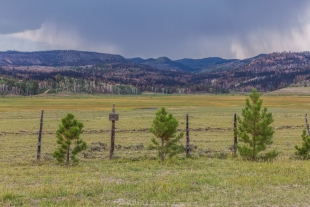Recent forest fire along Rt 143, Dixie National Forest, Panguitch, Utah