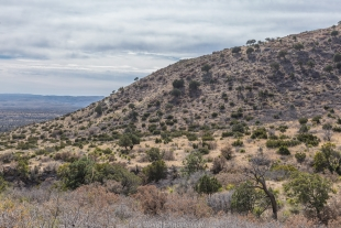 Trees and hillside along Smith Spring Trail, Guadalupe Mountains National Park, Texas