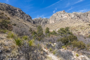 Green around the spring viewed from Smith Spring Trail, Guadalupe Mountains National Park, Texas