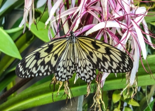Cox Butterfly & Orchid Pavilion, Tucson Botanical Gardens, Arizona