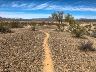 Burro trail, Alamo Lake State Park, Arizona