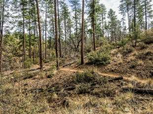 Trail 396, Prescott National Forest, Arizona