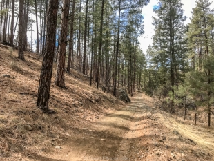 Schoolhouse Gulch road, Prescott National Forest, Arizona