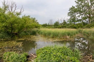 Willow Marsh wetlands at Moraine View State Park, Ellsworth, Illinois