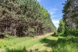 Plantation trail, Lake Wissota State Park, Chippewa Falls, Wisconsin