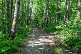 ATV trail near Sailor Lake NF Campground, Chequamegon-Nicolet National Forest, Park Falls, Wisconsin