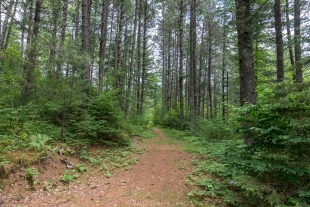 Trail 175 near Round Lake, Chequamegon-Nicolet National Forest, Park Falls, Wisconsin