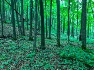 Open woods along the trail, Perkinstown Winter Sports Area, Wisconsin