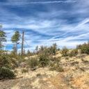 Trail 396 – Prescott NF