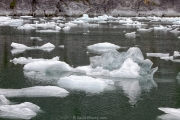 LeConte Glacier (near Pettersburg AK)