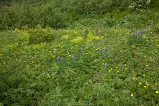 Wildflowers on Mt Robberts