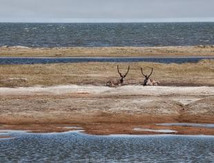 Prudhoe Bay