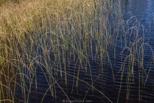 Fall grass in Long Lake, Wisconson