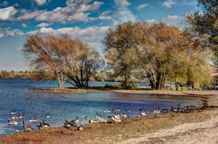 Geese on shore of Lake Superior near Ashland, WI