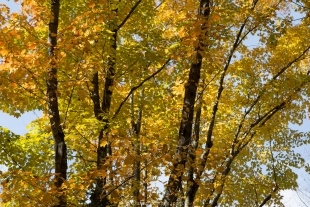 Fall colors on the Penokee Mountain Trail, Chequamegon-Nicolet National Forest, Wisconsin