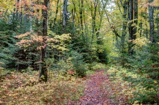Portage trail to West Twin Lake, Wisconsin