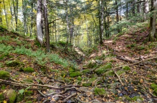 Fall woods near Morgan Falls, Chequamegon-Nicolet National Forest, Wisconsin