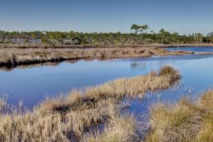 Big Lagoon State Park, grass marsh
