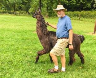 David Elmore with llama Franklin