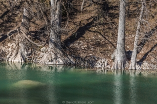 Cypress trees along Guadalupe River, Texas