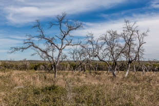 Trees on a nice day at Guadalupe River State Park, Texas