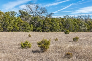 FIeld along the Bamberger Trail, Guadalupe River State Park, Texas