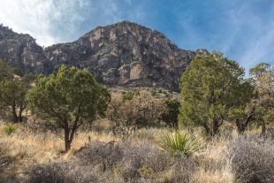 Trees, mountain, and sky along Devil's Hall Trail, Guadalupe Mountains National Park, Texas