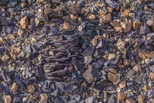 Colorful rocks and pebbles along hike around Crystal Hill, Kofa National Wildlife Refuge, Arizona