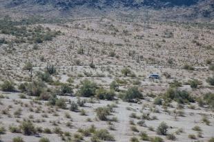 Dirt roads, saguaro, and Vanessa in the Crystal Hill area, Kofa National Wildlife Refuge, Arizona