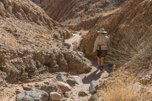 Walking along a side canyon, Mecca Hills Wilderness, Box Canyon Road, California