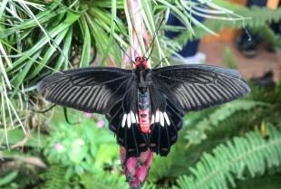 Cox Butterfly & Orchid Pavilion, Tucson Botanical Gardens, Arizona