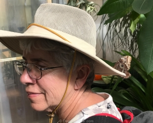 Butterfly lands on hat, Cox Butterfly & Orchid Pavilion, Tucson Botanical Gardens, Arizona