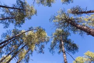 Pondorosa Pines near White Spar Campground, Prescott, Arizona