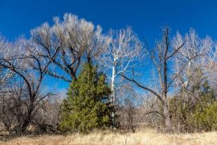 Variety of trees along Oak Creek, Red Rock State Park, Sedona, Arizona