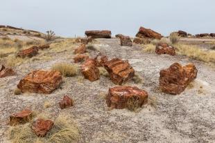 Array of logs, Rainbow Forest Museum Walk, Petrified Forest National Park, Arizona