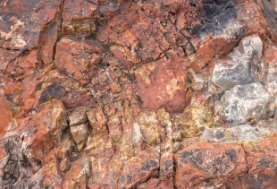 Rings in a petrified log, Rainbow Forest Museum Walk, Petrified Forest National Park, Arizona