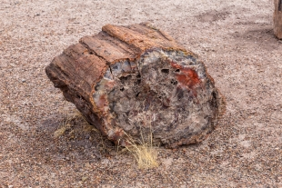 Quartz crystal log and grass, Crystal Forest, Petrified Forest National Park, Arizona