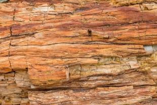Quartz that looks like the original wood, Crystal Forest, Petrified Forest National Park, Arizona