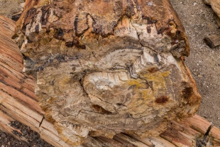 Colorful wood patterns, Crystal Forest, Petrified Forest National Park, Arizona
