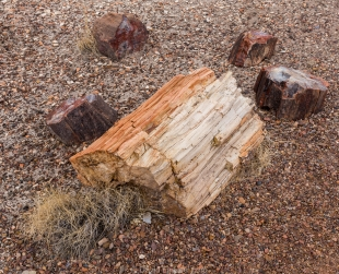 A range of colors in pretrified logs, Crystal Forest, Petrified Forest National Park, Arizona