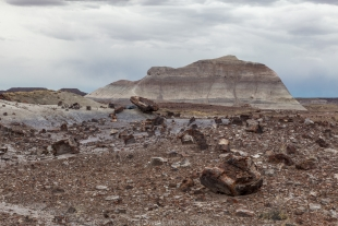 Petrified wood scattered over the ground, Crystal Forest, Petrified Forest National Park, Arizona