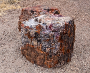 Rainbow of colors in a pretrified log, Crystal Forest, Petrified Forest National Park, Arizona