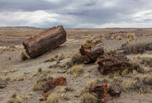 Logs and grass under a desert storm, Crystal Forest, Petrified Forest National Park, Arizona