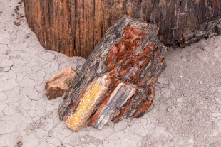 Many colors in a small log, Jasper Forest hike, Petrified Forest National Park, Arizona