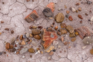 Petrified wood pieces mixed with river-eroded pebbles, Jasper Forest hike, Petrified Forest National Park, Arizona