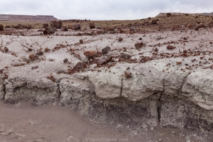 Scattered petrified wood scattered over the badlands, Jasper Forest hike, Petrified Forest National Park, Arizona