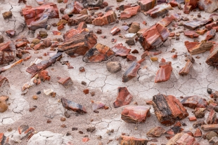 Red quartz pieces on the mud, Jasper Forest hike, Petrified Forest National Park, Arizona